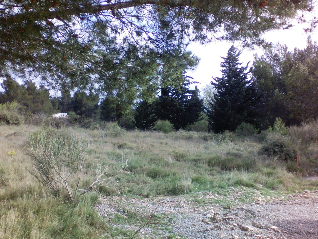 Rare! Land 1318 m² in the pine forest!