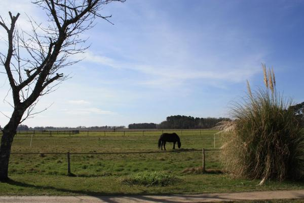 Extensive property suited to a project relating to tourism, small farming or as is the case currently, an equestrian venture.