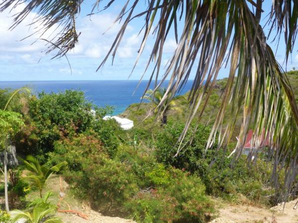 agence immobiliere saint martin 97150